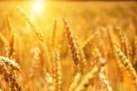 10° Riunione G20 degli esperti scientifici del settore agricolo