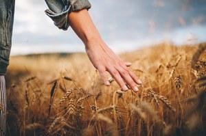 Le conseguenze dei cambiamenti climatici in agricoltura