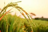 UN Food Systems Summit Science Days 2021