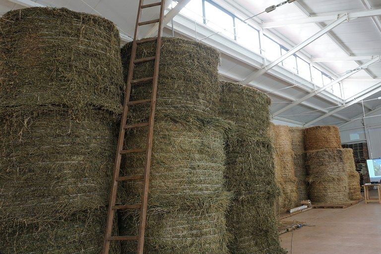 Bondeno. Azienda agricola ricostruita