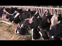 Generazione A Doc. L'agroalimentare emiliano-romagnolo verso l'Expo 2015